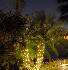 palm tree party string lights solar lights for trees string lighting on palm in wilmington outdoor amazing pixelmari picture excellent inspiration