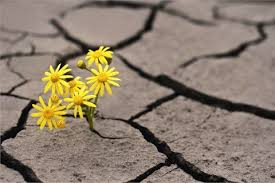 Image result for adversity and creativity