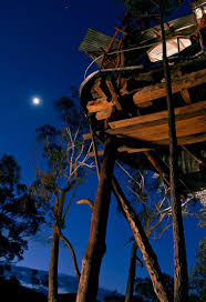 Here Are Australiau0027s 10 Most Unusual Listings On Airbnb  Business Treehouse Accommodation Nsw