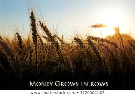 Money Grows Rows Farming Quotes Golden Stock Photo Edit Now Gorgeous Farming Quotes