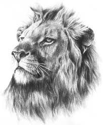 realistic lion face drawing. Fine Drawing Grey Realistic Lion Face Tattoo Design With Realistic Lion Face Drawing R