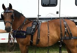 chrysalis acres, equipment for the carriage driving horse and driver horse harness at Horse Harness