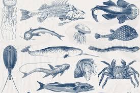 Vintage Illustrations 46 Vintage Sealife Illustrations