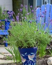 best plants for creating privacy