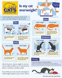 Overweight Cat Chart Cat Obesity How To Keep Your Cat Healthy Cats Protection