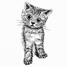 D Fi Cat Art 1 Jour 1 Dessin De Chat Fou De Chats