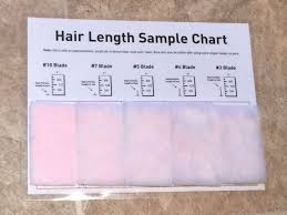 Hair Length Sample Chart 74 Exhaustive Grooming Length Chart