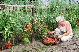 Small Picture Amusing 28 Kitchen Gardening Ideas Kitchen Garden Design