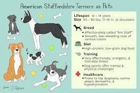 Black Lab Puppy Weight Chart Staffy Weight Chart Dog Obesity Chart Average Weight Of