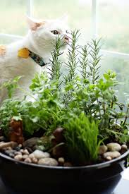 how to create your own lush indoor cat garden