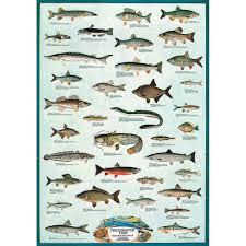 Freshwater Fish Educational Chart Walmart Com