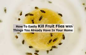 Home Reme s for flies