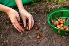 ToDo List For Fall Gardening  DIYFall Gardening