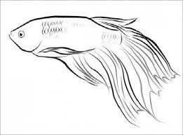 Betta Fish Printable Coloring Pages 5 Zentangle Drawing