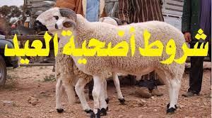 شروط أضحية العيد تعلمها قبل شراء الأضحية - YouTube