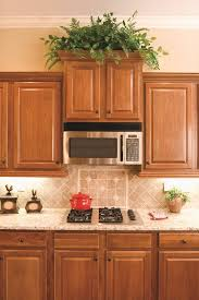 Decorations On Top Of Kitchen Cabinets Fascinating Best Kitchen Plants Plants For Kitchen To Decorate It Balcony