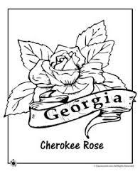 Small Picture State Flower Coloring Pages Virginia State Flower Coloring Page