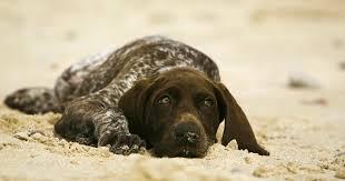 Normal Puppy Temperature Purina