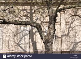 Tree Shadow Light Shade Trees Shadows Pattern Light Shade Light Shadow Stock Photo