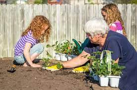 starting a fruit garden