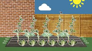 how to grow your veg in a small garden