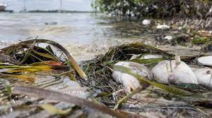 Red tide creeping south, high levels ...