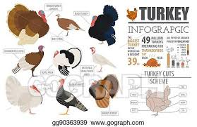 Vector Clipart Poultry Farming Infographic Template