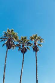 palm trees tumblr vertical. Three Palm Trees ~ Nat. Tumblr Vertical L