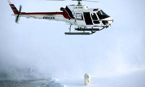 Why Do Polar Bears Have White Fur And Nine Other Polar Bear