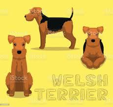 Dog Welsh Terrier Cartoon Vector ...