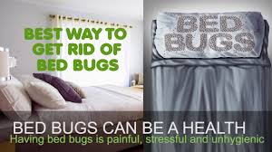 BEST WAY TO GET RID OF BED BUGS - TIPS FOR BED BUG TREATMENT ...
