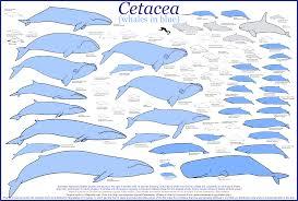 Animal Tracks Whales