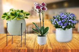 Flower freshness 7 day freshness guarantee. M S Mother S Day Flowers 2021 From 20 And Free Delivery