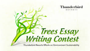 essay contest environmental essay contest