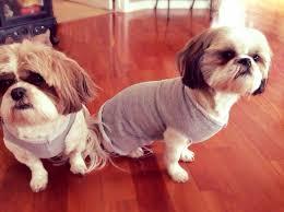 no sew five minute dog sweater