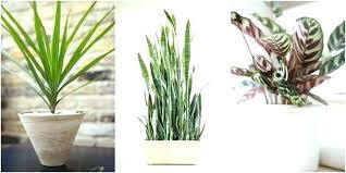 office pot plants. Office Plant Ideas Awesome Astounding Plants No Light Design Best Indoor . Pot