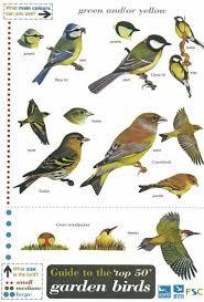 Id Chart Top 50 Garden Birds