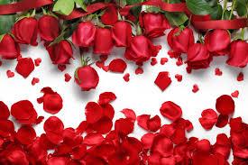 Red Flower Wallpaper Red Flower Wallpaper Rome Fontanacountryinn Com