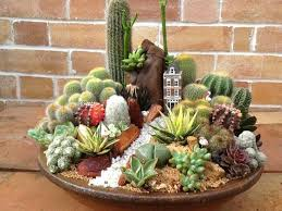 Small Picture Best 25 Mini cactus garden ideas on Pinterest Mini cactus