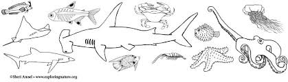 You may not use these pages for any commercial purposes. Ocean Animal Coloring Pages