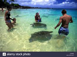 Green Sea Turtles Come Face To Face With Visitors To