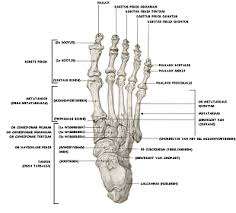 pijn in benen en voeten