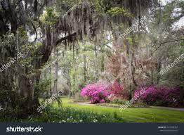 magnolia plantation gardens charleston south ina usa