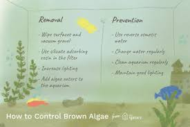 brown algae in aquariums