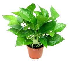 office feng shui plants. Feng Shui Plants For Office House Desk New Bag Living