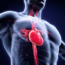 essay on human heart essay on human heart