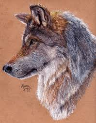 gray wolf drawing colored. Contemporary Colored Grey Wolf  Redraw By KristynJanelledeviantartcom And Gray Drawing Colored N