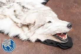 wolf rug 02 wolf skin rugs