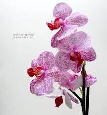 types of flowers in bouquets. pink potted orchids types of flowers in bouquets