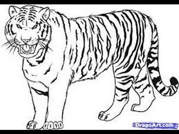 tiger drawing pictures.  Drawing Drawing Tiger  Picture Inside Tiger Drawing Pictures I